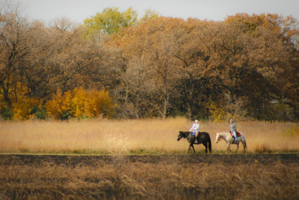 Horses Trees Minnesota Fall Woods Fort Ridgely