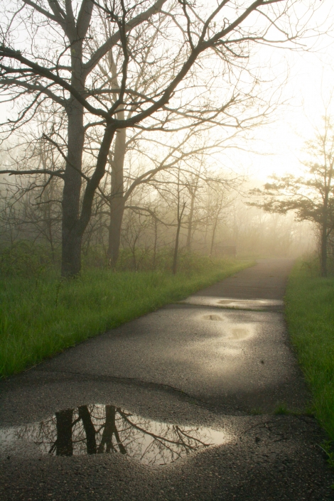 Path Fog Rain Puddles Hiking Sunrise Spring Minnesota Williams Nature Center