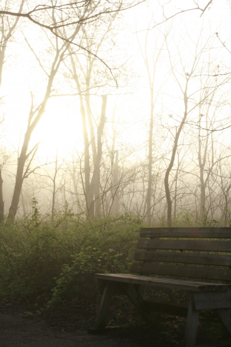 Spring Hike Sunrise Minnesota Bench Woods Fog