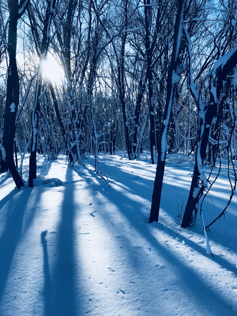 Winter Trees Light Shadows Snow Minnesota Sun