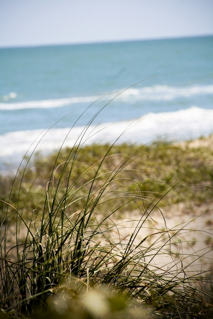 Beach Grasses Water Blue Sky South Padre SPI