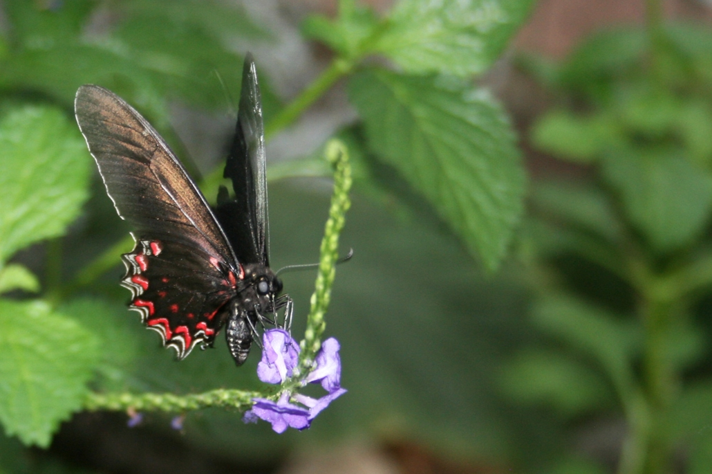 Butterfly Purple Flower Leaves