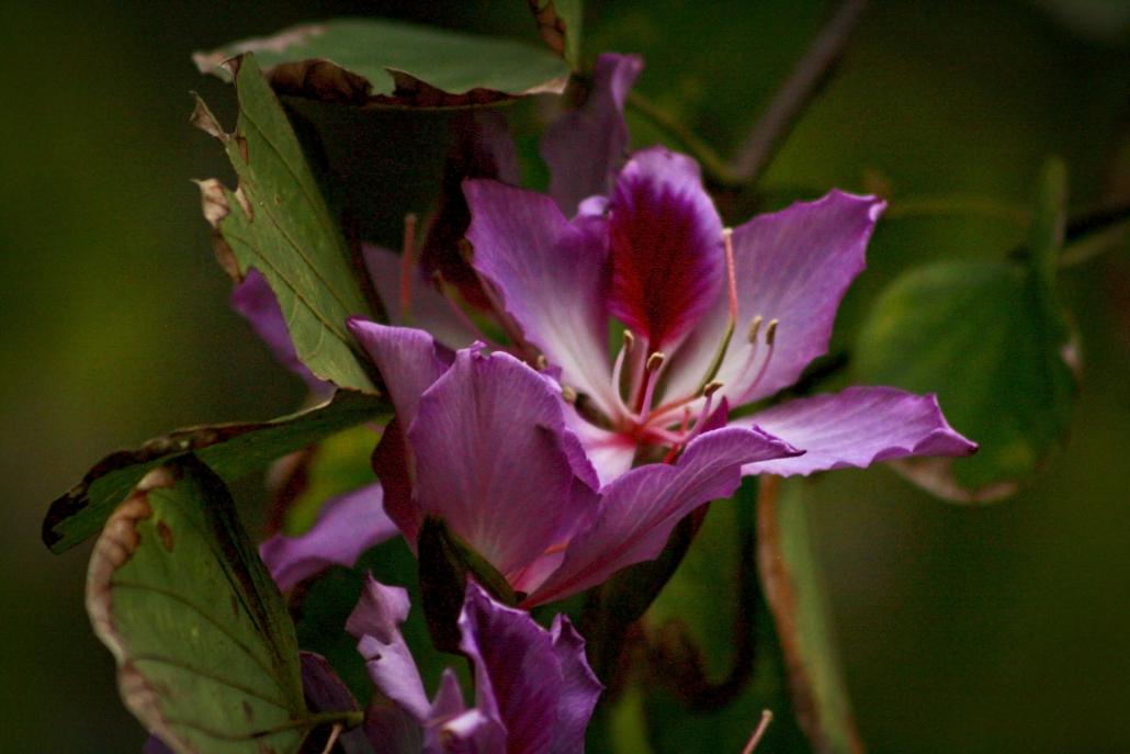 Flower Purple Trees Nature